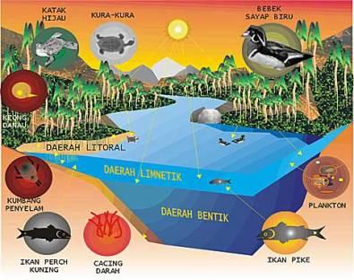 Empat Daerah Utama Pada Danau Air Tawar