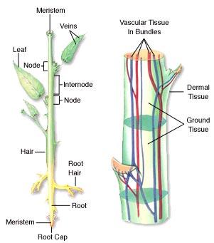 Jaringan pada tumbuhan nasrul bintang education jaringan pada tumbuhan ccuart Choice Image