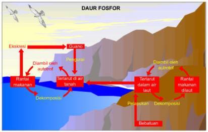 Siklus fosfor di Alam