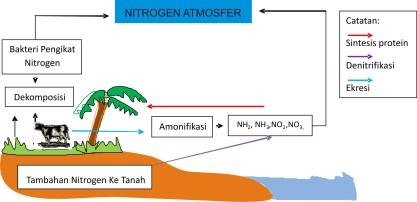 Siklus Nitrogen di Alam